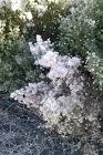 cam00261-snow.gif